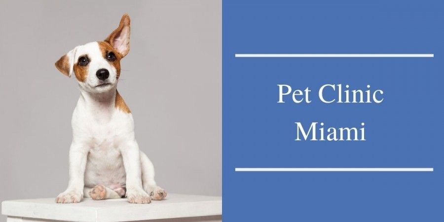 Pet Clinic Miami