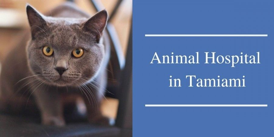 Animal Hospital in Tamiami